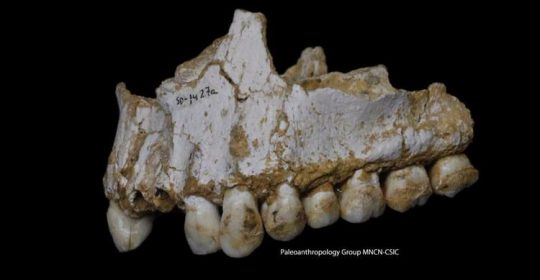 Vegetarian Neanderthals? Extinct human relatives hid a mouthful of surprises